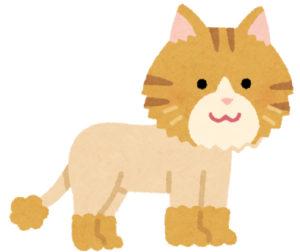サマーカットされた猫