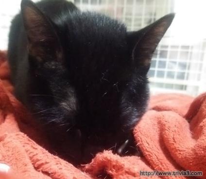 毛布を吸う猫
