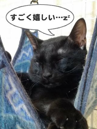 ハンモックでうっとりする猫