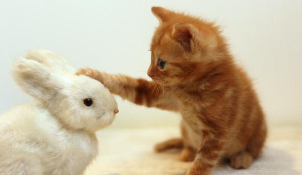 うさぎの縫いぐるみに触れる子猫