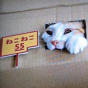 ねこねこ55でダンボールから顔をだす猫