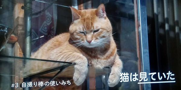 猫は見ていた