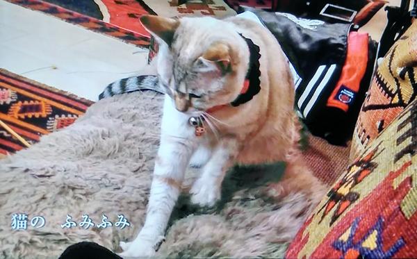 猫のふみふみ ねこねこ55
