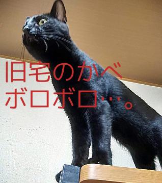 壁を引っ掻いた黒猫