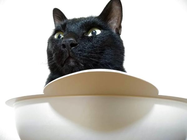 ひんやり猫鍋に入る黒猫