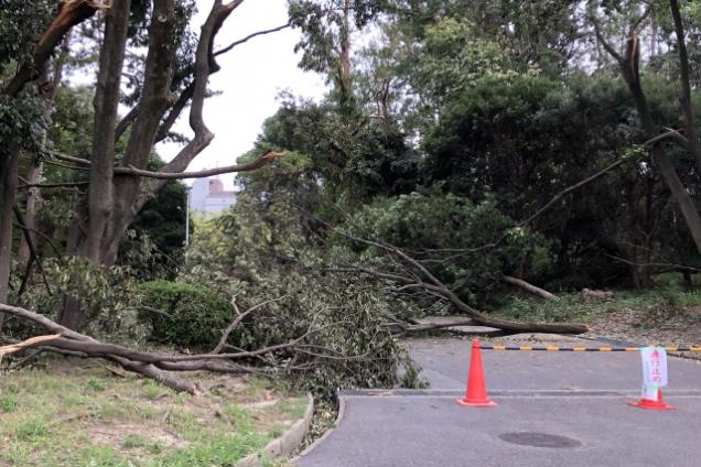木が倒れて通行止め