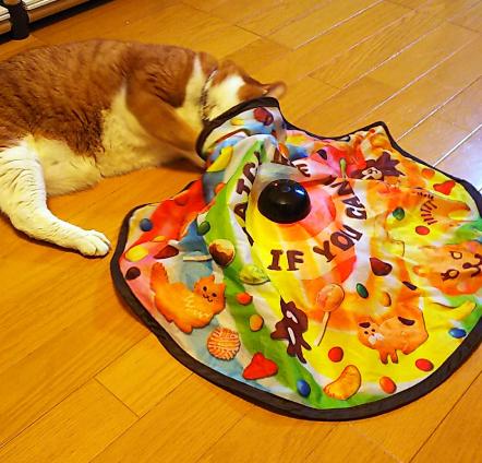 キャッチ・ミー・イフ・ユー・キャンで遊ぶ猫
