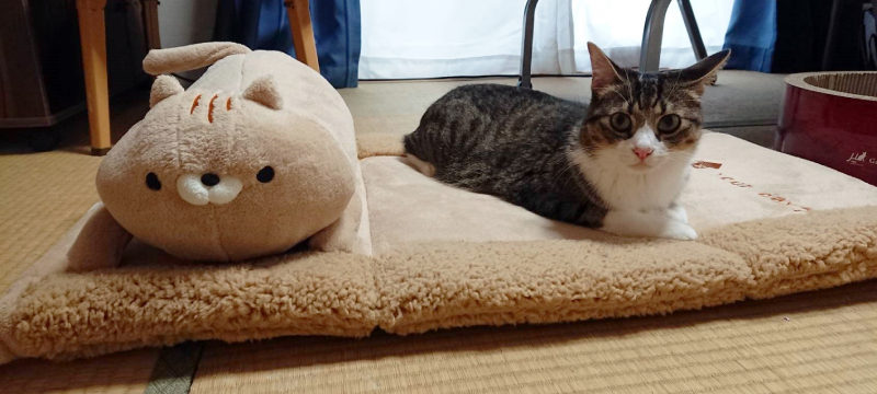 おかえり園田くんの戸田さんのペットベッド